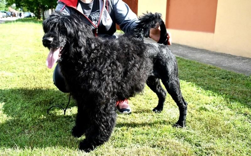DYLAN DOG LAGO DI FORTUNA