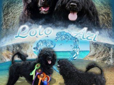 LAGO DI FORTUNA | PORTUGUESE WATER DOG