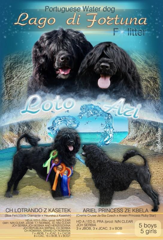 LAGO DI FORTUNA   PORTUGUESE WATER DOG