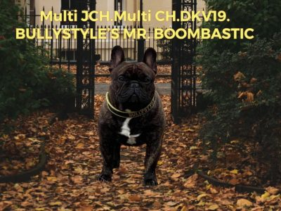 BULLYSTYLE'S MR.BOOMBASTIC | French Bulldog