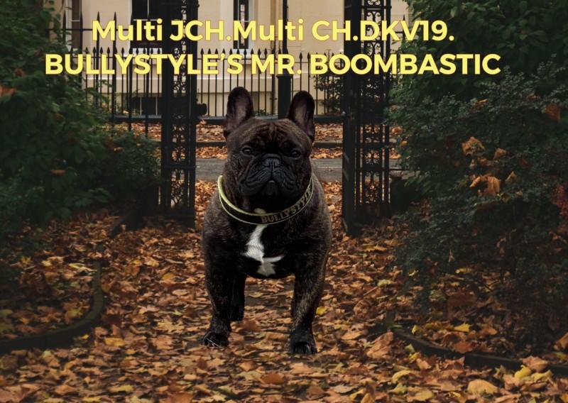 BULLYSTYLE'S MR.BOOMBASTIC   French Bulldog