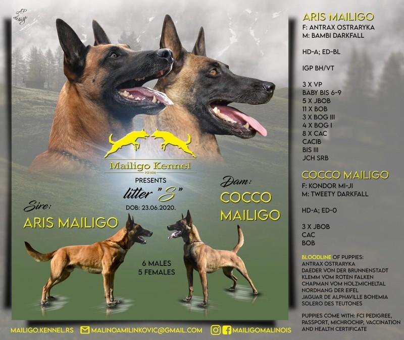 FOR SALE Belgian shepherd - Malinois