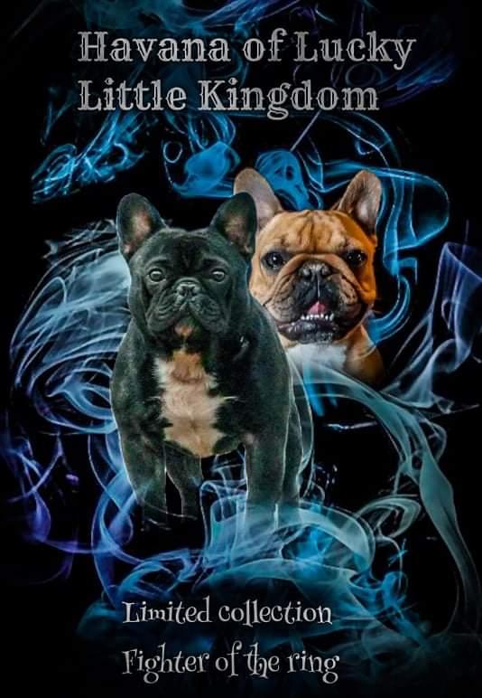 JCHSR, CHSR | French Bulldog