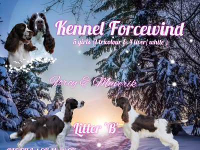FCI English Springer spaniel show kennel