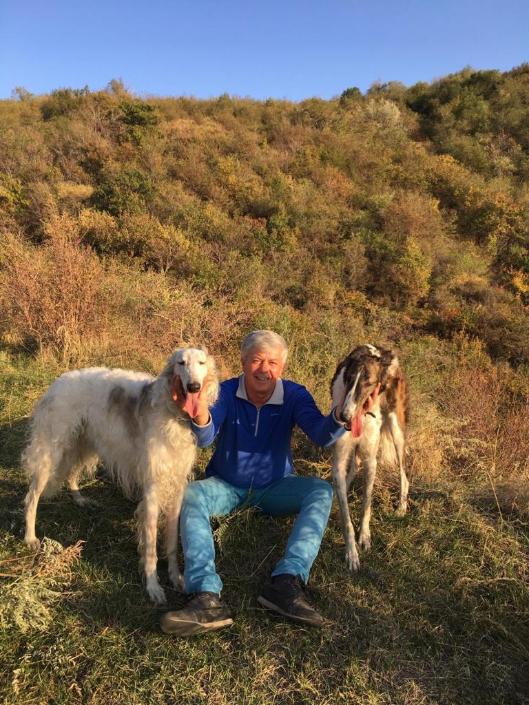 Russian Wolfhound Borzoi