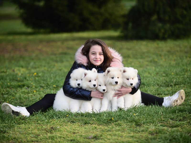 Samoyed puppies from Adorable Smile kennel