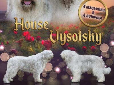SOUTH RUSSIAN SHEPHERD DOG