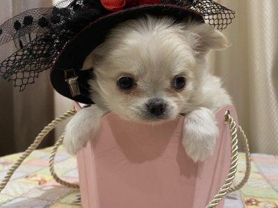 Jules Verne Chihuahua