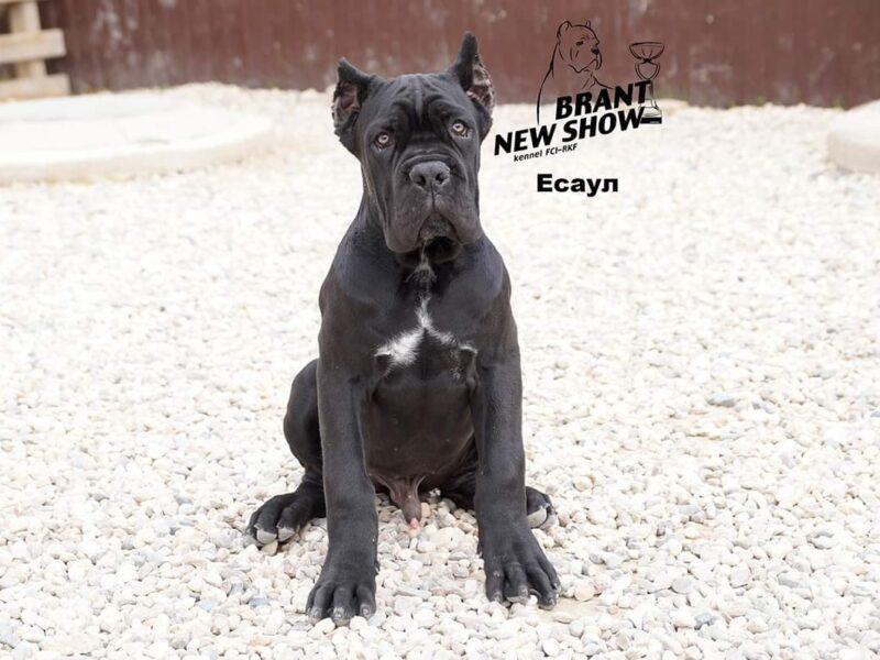 Brant new show Esayl