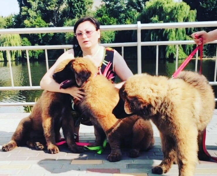 Leonberger Puppies
