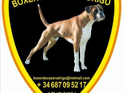Boxer Norton de Alidog