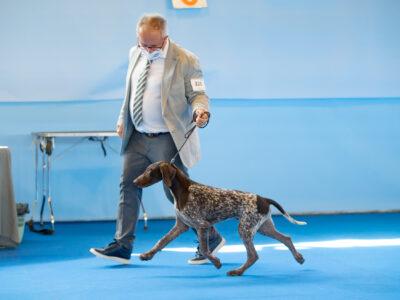 Fantastic 5 month old puppy GERMAN SHORTHAIRED POINTING DOG (DEUTSCH KURZHAAR)